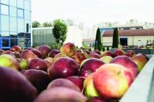 Alexandrion Group a pus la fermentat fructele din recolta de toamnă